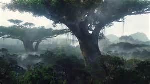 Jungle Landscape Pictures Trees Landscape Jungle Forest Fog Mist Wallpaper