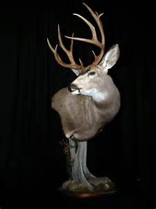 Finished up this mule deer mount
