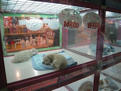 pet shops with puppies illinois now required to post more info on pet store puppies all