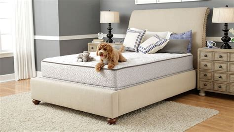 Sealy Beds Sealy Us