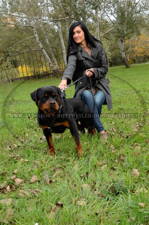 rottweiler dogs order genuine leather rottweiler harness wide chest plate