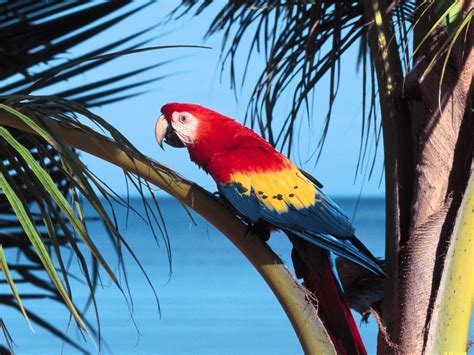 macaw parrot wallpapers fun animals wiki videos pictures stories