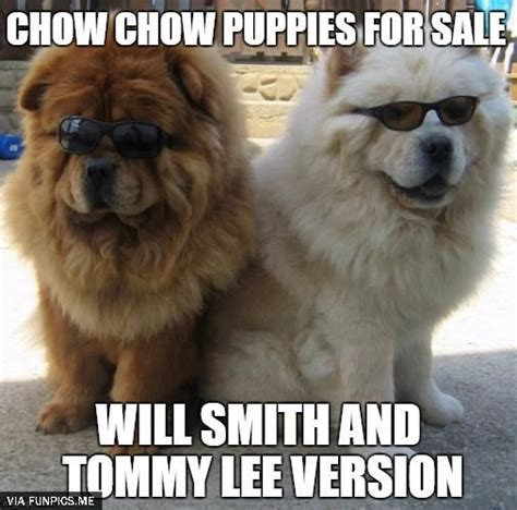 chow chow panda puppies for sale best 25 chow puppies for sale ideas that you will like on bake sale