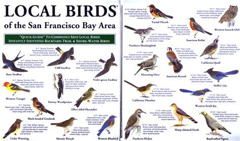 san francisco bay area local birds