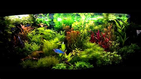 aquascape videos dutch aquascape youtube