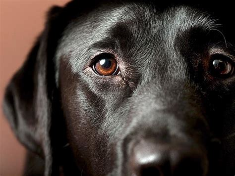 what to do for spots on dogs what to do if your has a seizure petfinder