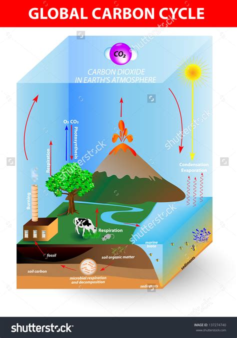 basics design 02 layout 2940411492 diagram basic carbon cycle diagram