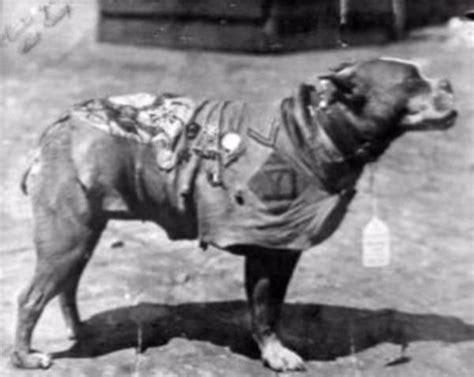 Sergeant Stubby History Coffeypot Sgt Stubby War
