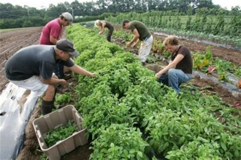 un report says small scale organic farming only way to feed the world grid world un report says organic farming is solution to world s food needs the grid news