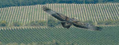 mirador columbine introducci 243 n william cole vineyards