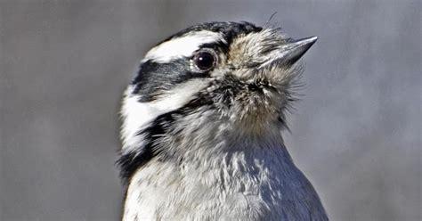 wild birds unlimited take the suet challenge