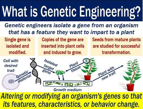 Genetic Engineering genetic engineering definition and meaning market