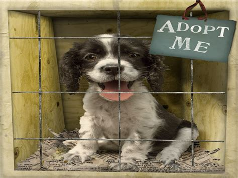 local puppies local animal shelters puppies animal shelter dogs adoption homes mexzhouse