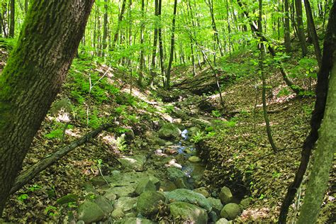 big woods minnesota seasons nerstrand big woods state park