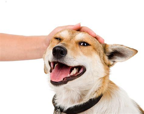 puppy personality test understanding puppy temperament testing