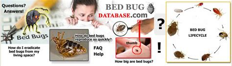 national bed bug registry bed bug registry database newfoundland and labrador