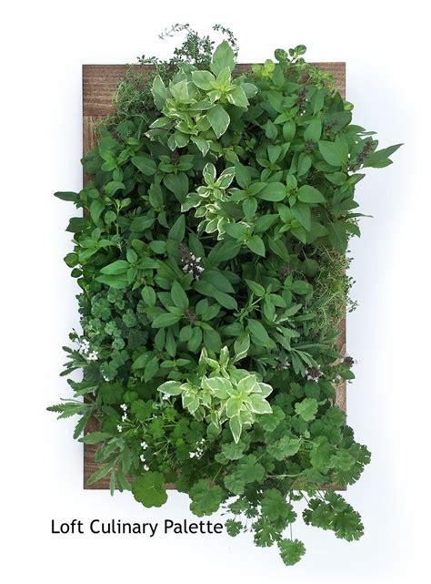 Herb Wall Garden Sage Living Wall Sage Living Wall Herb Garden