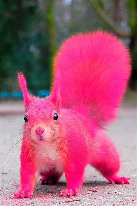pink squirrel tickle me pink pinterest