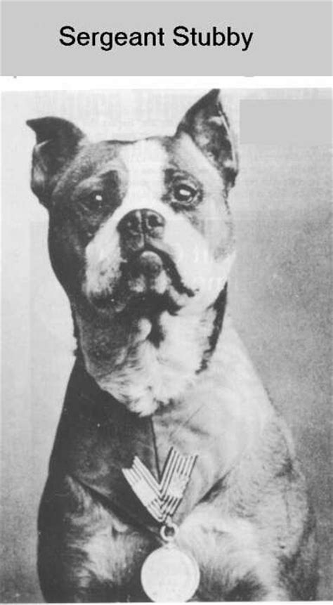 How Sergeant Stubby Died Loyalty Zac The All Black
