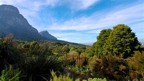 Cape Town Botanical Gardens Kirstenbosch National Botanical Gardens In Cape Town Expedia