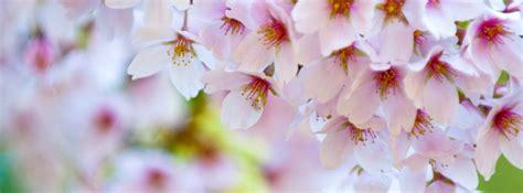 imagenes de flores bonitas para portada excelentes portadas primaverales para facebook 45