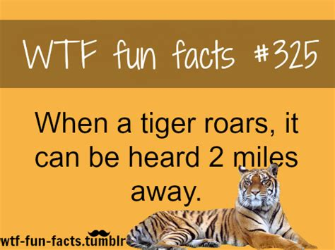 facts about the new year tiger facts