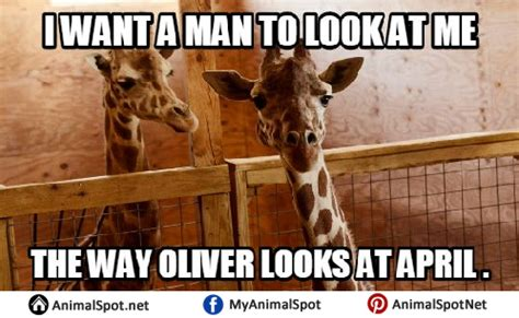 Giraffe Birthday Meme - giraffe birthday meme 28 images giraffe birthday memes