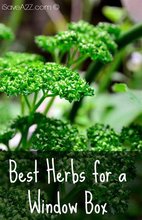 herbs   window box isaveazcom