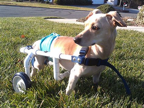 how many do puppies need in the year jerry west builds wheelchairs for dogs in need