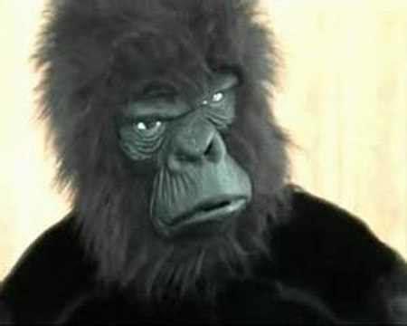 Wonderbra Recreates Cadbury Gorilla Advert For by Cadbury S Gorilla Advert Spoof