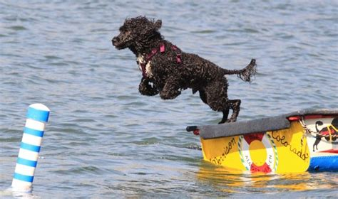 best swimming dogs the 10 best worst swimming breeds boat direct
