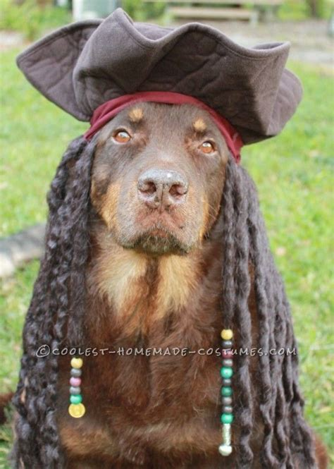 pirate costume for dogs best pirate costume