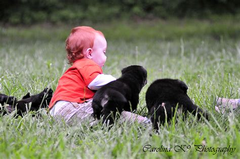 puppies frederick md pictured 4wks time outdoors and they loved it