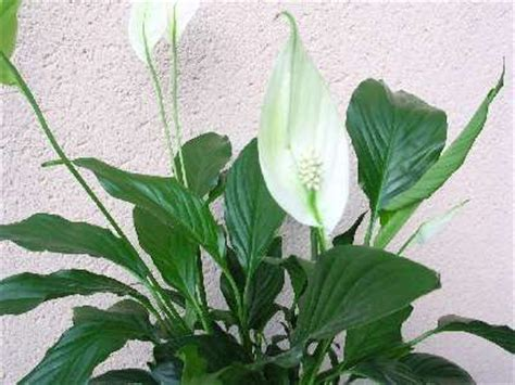 Plante Purificatrice D Air by Les Plantes D 233 Polluantes Seconde Nature