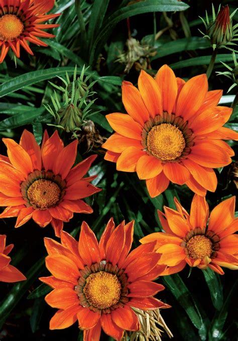 piante per terrazzo in pieno sole fiori da balcone pieno sole blackhairstylecuts