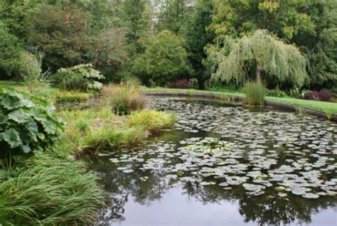 Soos Creek Botanical Garden 30 Best Images About Home Puget Sound Wa On Olympia And Museums