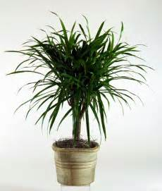 best house plants best houseplants that are hard to kill and maintenance tips