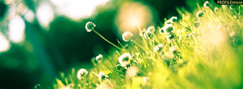 Green Covers by Green Grass And Flowers Photography Cover