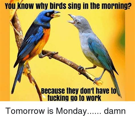 which birds that sing in the morning you why birds sing in the morning because they don t to ucking go to work tomorrow is