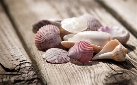 seashell wallpapers  desktop   fun