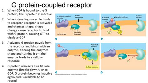 Cell Communication 3d1: Cell communication processes share ... G Protein Coupled Receptors Pathway