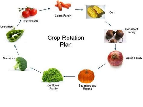 Crop Rotation Home Vegetable Garden 17 Best Images About Crop Rotation On Gardens