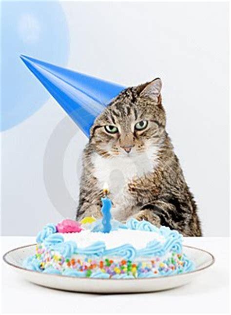 imagenes de happy birthday con gatos fel 237 z cumplea 241 os gatitos adorables gatitos adorables