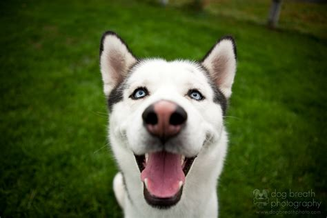 smiling puppies ayyy lmao quot puppies smiling quot or quot kittens smiling quot and it will improve your