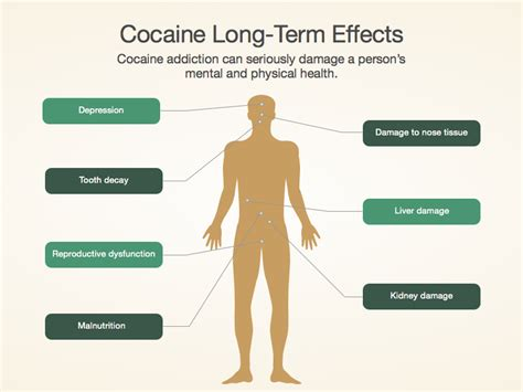 Term Of Use by Cocaine Facts Effects Cocaine Addiction Treatment