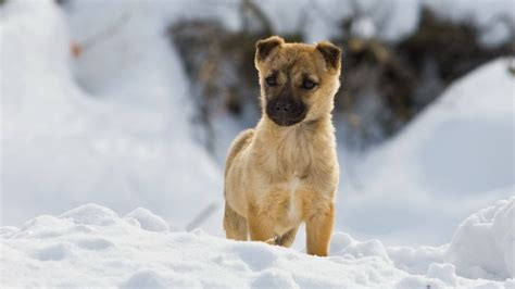 puppies in the snow puppy in the snow dogs picture