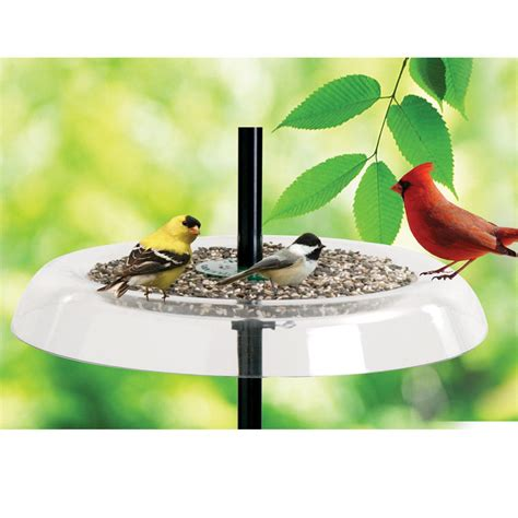 droll yankees giant seed tray bird feeder and squirrel