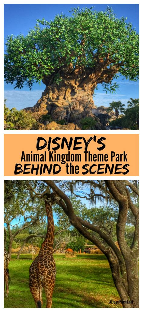 themes in animal kingdom film disney s animal kingdom theme park from behind the