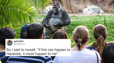 ted meme twitterati found a gorilla giving ted talk and then the