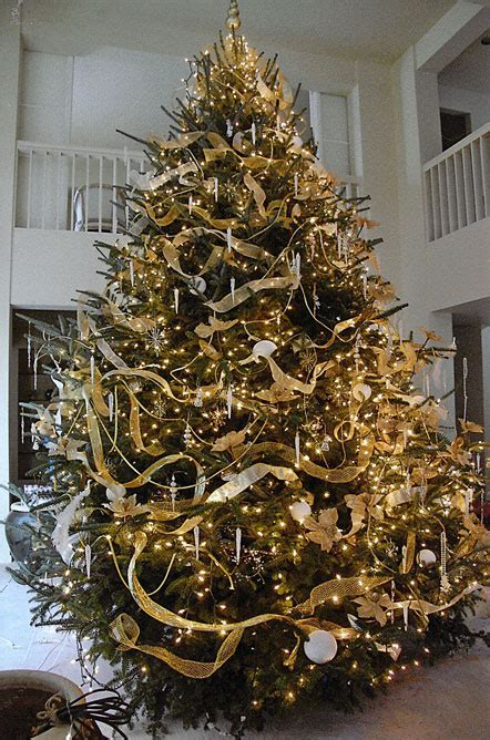 fir christmas tree ideas tree tree fraser fir in dubai terraforma dubai uae